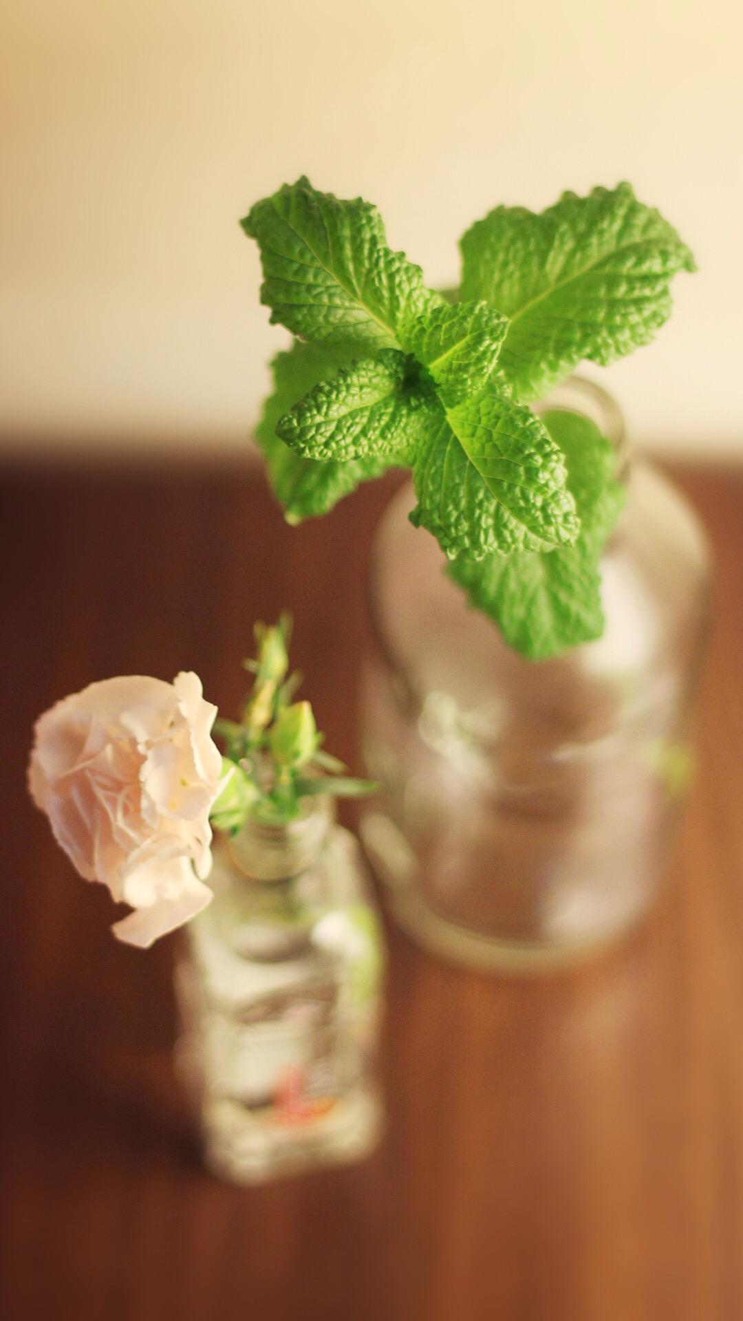 清新花卉盆栽手机壁纸7