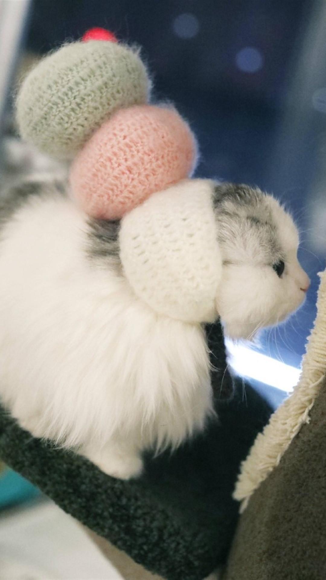 可爱萌宠猫咪高清手机壁纸2