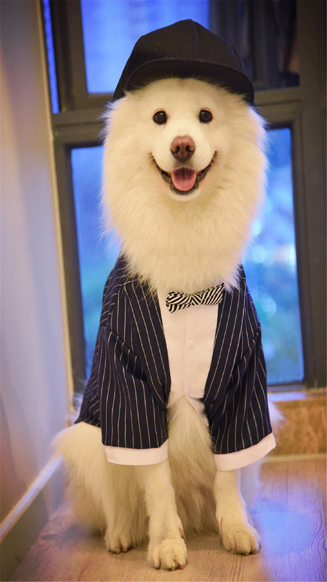 可爱狗狗萌宠手机壁纸1