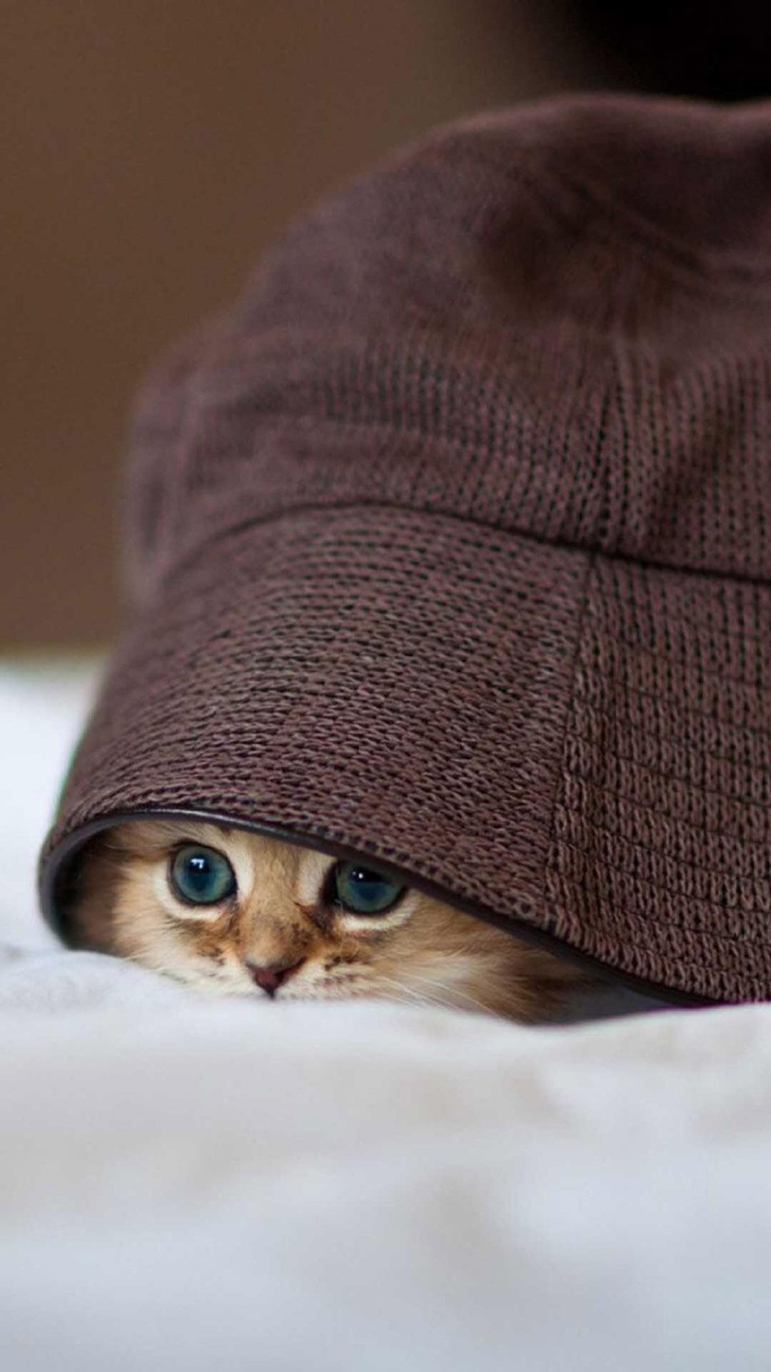 可爱小猫咪特写手机壁纸4